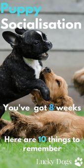 Socialización de cachorros | Lista de verificación de socialización de cachorros | Entrenamiento de cachorros | Cachorro Soc …   – Dog Training 101