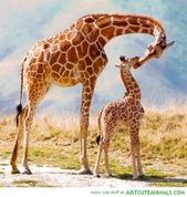 20 Amazing Photos Of Beautiful Animals