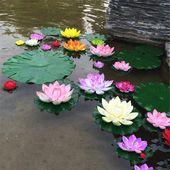 Egrow Lotus Flower Seeds Aquatic Plants Bonsai Lotus Seeds Perennial Plant for Home Garden