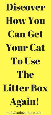 Entdecken Sie, wie Sie Ihre Katze dazu bringen, die Katzentoilette wieder zu benutzen