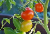 Kosten-Nutzen-Rechnung, wenn sich der eigene Gemüseanbau lohnt – #anbaukosten # own …   – Anbau kosten