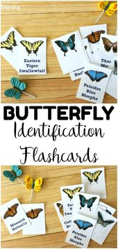 Printable Butterfly Identification Cards