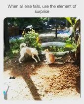 Kitty hat das nicht kommen sehen   – Cats & other funnies