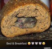 Bed & Breakfast. | Lustige Bilder, Sprüche, Witze, echt witzig   – witzig