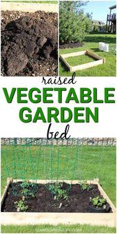 Tipps für den Anbau von Tomaten und anderem Gemüse in einem kleinen Garten mit erhöhten Beeten   – Container Garden
