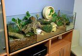 [Аквариум]  167x50x40 Aquarium mit natürlichen …   – Hamster