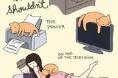 6 Katzen-Cartoons, die beweisen, dass Sie eine verrückte Katzen-Person sind