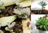Everything About Propagating Succulents: 4 Basic Ways – Houseplants /indoors/hea…