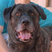 Baloo Is A 120 Pound Sweetheart With A Heart Of Gold And He Debuts