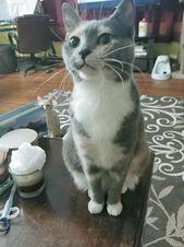 Ein anderes unserer Mädchen Beans mit einer Fotobombe von ihrem kleinen Bruder Archie #Cat #Pet …