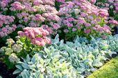 My Favorite Plant Combinations 23 (My Favorite Plant Combinations 23) design ide…
