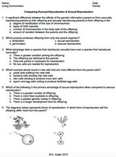 Mitosis Worksheet And Diagram Identification Answer Key ...