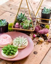Create Your Own Terrarium with ANKO x
