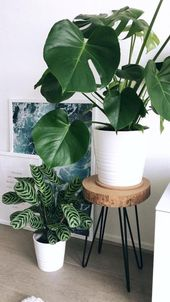 ॐPinterest: ash_january minimal home decor with pretty plants