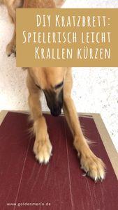 Kürzen Sie vorsichtig Hundeknirschen leicht