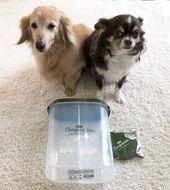 3coinsのドッグフード保存グッズが超便利 写真付き体験レポ いぬのきもちweb Magazine ドッグフード いぬ 犬