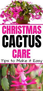Wie man einen Weihnachtskaktus züchtet – Gardening