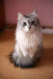 Hallo, ich bin Eispfote und ich bin 7 Monde alt! Meine Mutter ist die Königin u… – Katzen