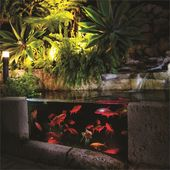 Holman Rgb Colour Pond Light 3 Pack Pond Lights How To Make Terrariums 12v Led Lights