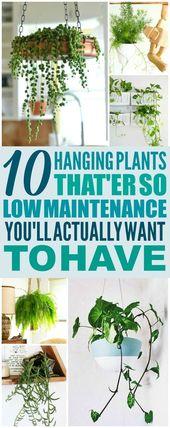 Diese 10 wartungsarmen Hängepflanzen sind DIE BES…