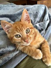 """""""Ich liebe dich Kitty Cat 🐈"""" Ich auch! Wer bist du schöne Rätsel Person? Gepinnt / R …"""