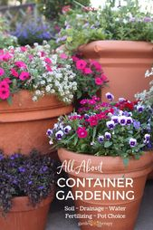 The Secrets and techniques to Profitable Container Gardening