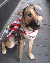 The Best 3 Legged Dog Costume Ever 3 Legged Dog Pet Costumes