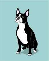 From Craigslist Post Found Male Boston Terrier Found Boston Terrier Little Rock I Am Boston Terrier Illustration Boston Terrier Boston Terrier Painting