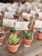 10 Creative Ways to Use Succulents in Your Wedding