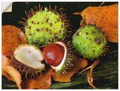 Artland Wandfolie »Anke Brehm: Kastanien« kaufen