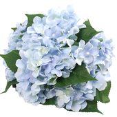 Felice Arts Künstliche Blumen 18 Quot Silk 7 Big Head Hortensien Bouquet Für Hochzeitszimmer Home Hotel Party Dekoration   – Party Ideas