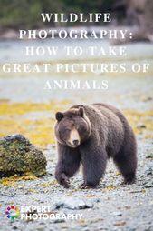 Tipps für die Tierfotografie