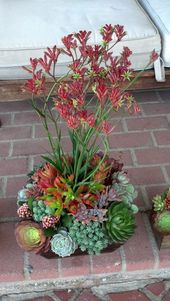 Kangaroo paws succulent arrangement. Design by Ana Calderon.
