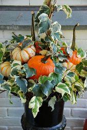 long stemmed pumpkins and ivy                                                   …