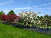 Apple Tree Companions: Was unter Apfelbäumen zu pflanzen   – Gardening