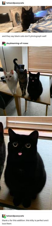 38 Times Tumblr Really Understood What Cats Are All About