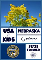 Nebraska State Flower With Images Nebraska State Nebraska Usa Facts