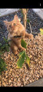 هريرة سيبيريا متاحة للبيع أبو ظبي 109904 Plants