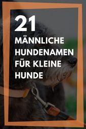 21 Mannliche Hundenamen Fur Kleine Hunde Hundenamen Kleine