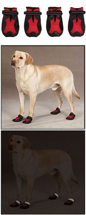 Casual Canine X Treme Weather Dog Boots At The Animal Rescue Site