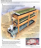 Simple Aquaponics System for Growing Your Own Food & Fish At Home