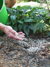 Den Boden ausreichend mit Nährstoffen versorgen  – Garten