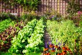 Companion Planting Guide – Layout Tips for Your Home Vegetable Garden