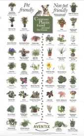 Haustierfreundliche Pflanzen und Giftpflanzen für Haustiere
