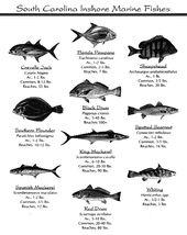 South American Fish Shellfish Poster Unique Chart In 2020 Fish Chart Sea Fish Shellfish