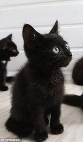 Treffen Sie die Katzen, die niemand will – nur weil sie schwarz sind   – Katzen Bilder