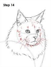 How to Draw a Maine Coon Cat and like OMG! get some yourself some pawtastic ador…