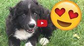 Scottish YouTuber Adopts New Border Collie Puppy   – Animals