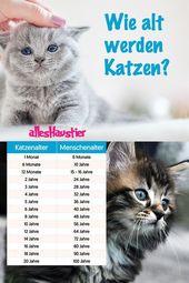 Wie alt sind katzen Fakten und Lebenserwartung bei Katzen   – Katzen