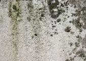 Schimmel von Badvorhang, Fliesenwand, Bad und Keller entfernen